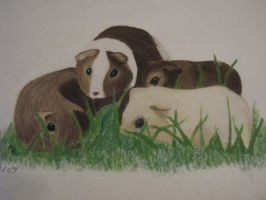guinea pigs by elenellee