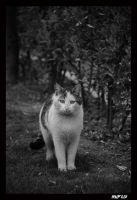 cat_2 by mufash