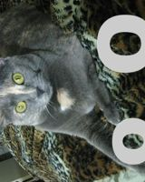 LOLcat by eva-st-clare