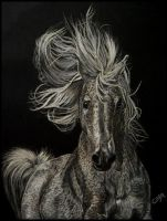 Impetueux by artiste-animalier
