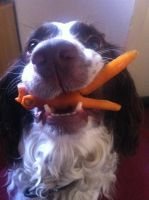 Woody gets carrot fish by Kayleigh-Kaz