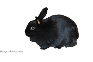 Black Rabbit PRECUT PNG Stock by Tris-Marie