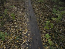 Duckboards Partially Covered With Leaves by Lightningball