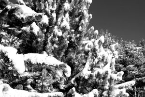 Snowy Woods 12 by Adeimantus