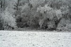 winterland 34 by priesteres-stock
