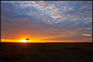 Beautiful Maasai Mara by mitchellkrog