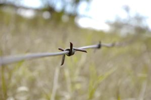 barbed wire by rainboo