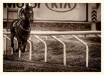 A Day At The Races -The Home Stretch by AndersStangl