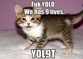 Lolcat YOLO by AlphaMoxley95