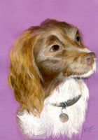 Dog Commission by maxine