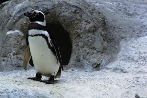 Waddle Waddle Penguin by Wh4T