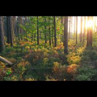 sunshine forest by PatrickRuegheimer