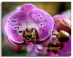 Orchid - 2 by bp2007