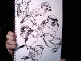 Sparrows by PulseMap