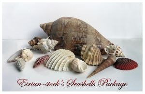 Seashells Package by Eirian-stock
