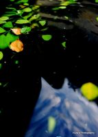 Leafy Water 1 by turtleaffection