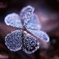 Frozen clover by Juchise
