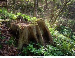 Tree Stump 23 by AnitaJoy-Stock