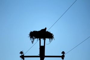Silhouette of a Hawk by VileYonderboy