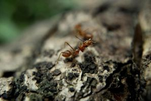 Are You an Ant? by caturs