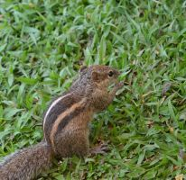 Squirrell 2 by jennystokes