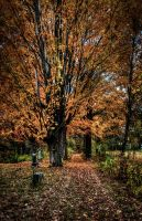 Hilldale, October 2014 by P1x3ltr4sh