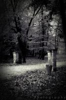 Forest of October by CromarK