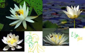 Some naughty Honeybee and water lilly by TheLittlehoneybee