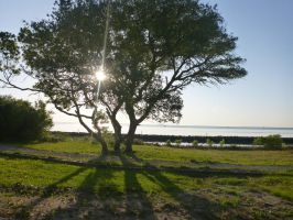 Morning on Harkers Island by usedbooks