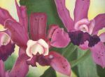 Orchids by uptowngirl