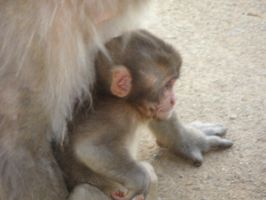 What a cute little baby Monkey by The42ndTenguJournal