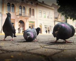 Pigeon-view by realityDream