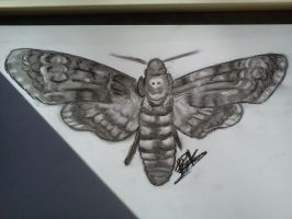 .:[DOODLE] DEATH HEADS HAWK MOTH:. by Maniactheleader