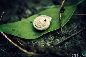 escargot by mrdondre