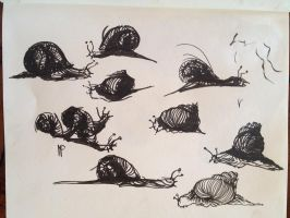 Snail sketch. Indian ink by VLStone