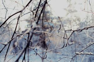 twigs by antarctics