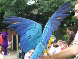 .Macaw wings 1. 0864 by DelinquentDog