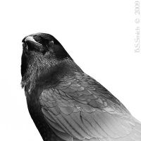 Nevermore by Black-White-Club