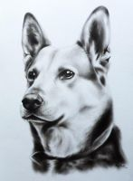 Dog portrait by KajaNijssen