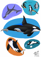 Another Dolphin dump by Sabre471