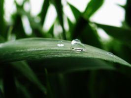 Raindrops by TiSo94