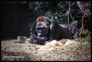 Sleeping giant by TlCphotography730