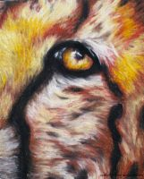 Eye of the Cheetah by CaitlinXxXCore