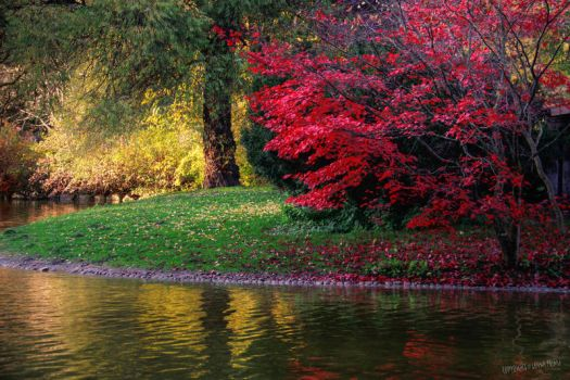Red leaves and reflections by gameover2009
