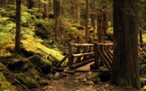 Forest Bridge by Boomagoo
