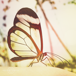 Delicate Transparency by Kezzi-Rose