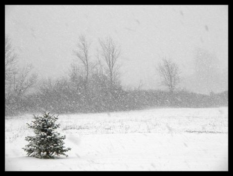 First Snowfall by abstractIntention