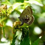 Lumiere et Papillon by hyneige