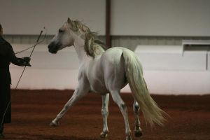 Andalusian 5 by reachthestars-stock