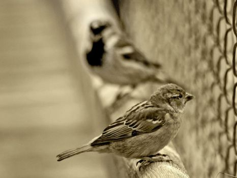 Birds life 2 ... by gin-sui